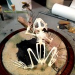 Pinning frog skeleton