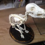 Dog Skeleton work
