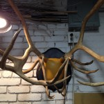 Reindeer antler mount finished (WRONG)