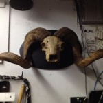 Demon Antler mount