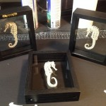 Sea Horses in frames