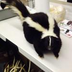 Fat Skunk