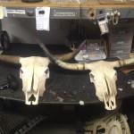 Steer Skulls