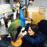 Peacock work