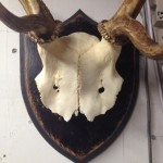 Antler crowns on plaque
