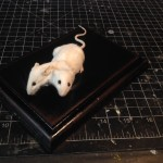 White two-headed mouse
