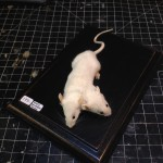 Another two-headed mouse