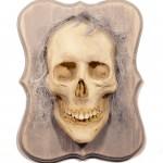 Spirit Skull 6 of 20