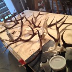 Antlers in the studio