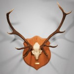 Finished antler set